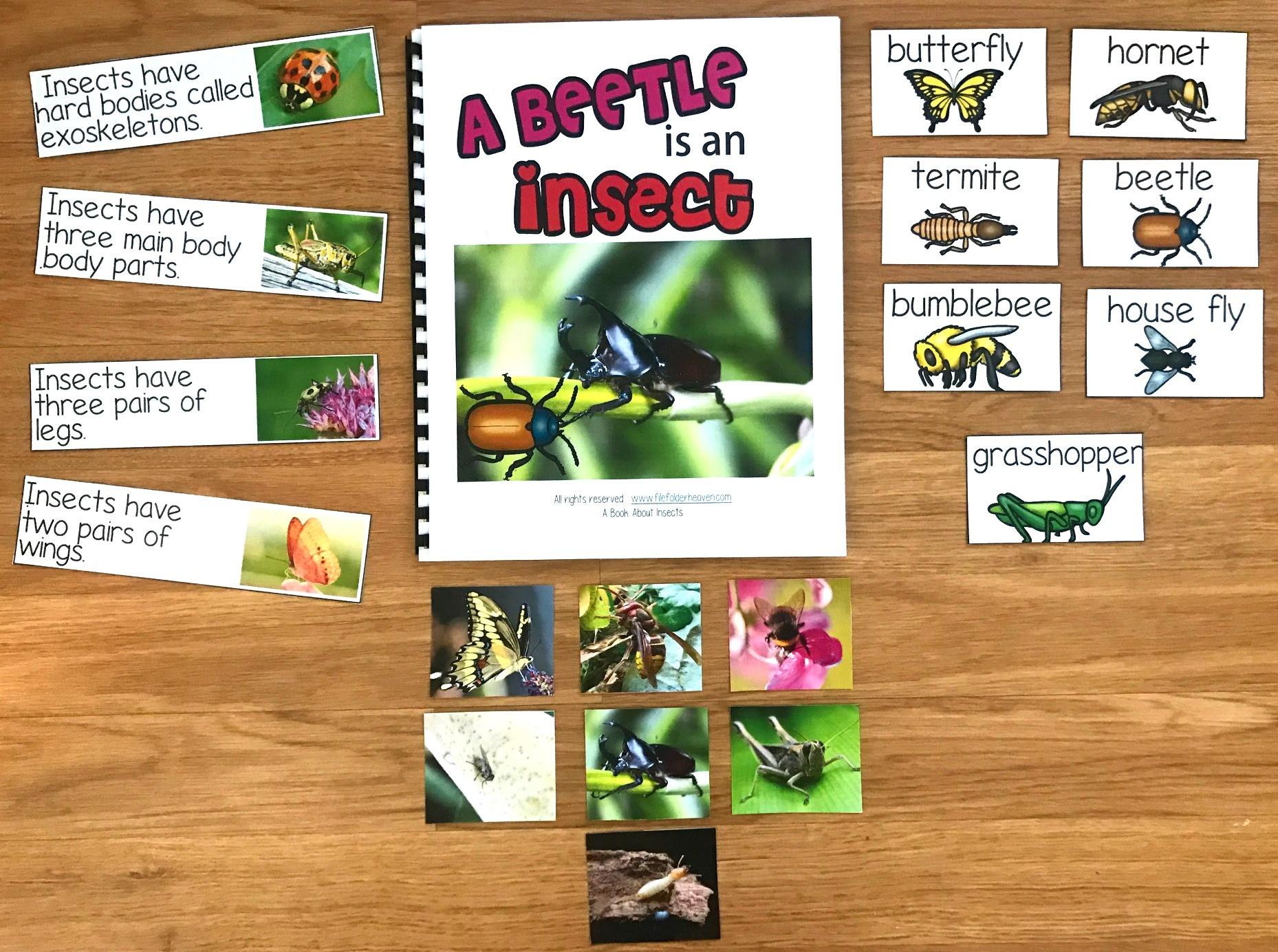 """A Beetle is an Insect"" Adapted Book"