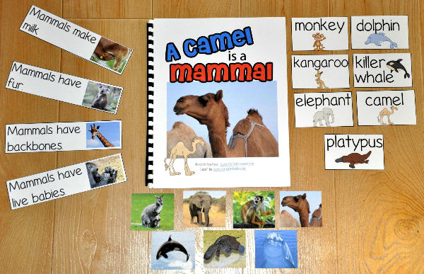 Mammals Adapted Book--A Camel Is a Mammal