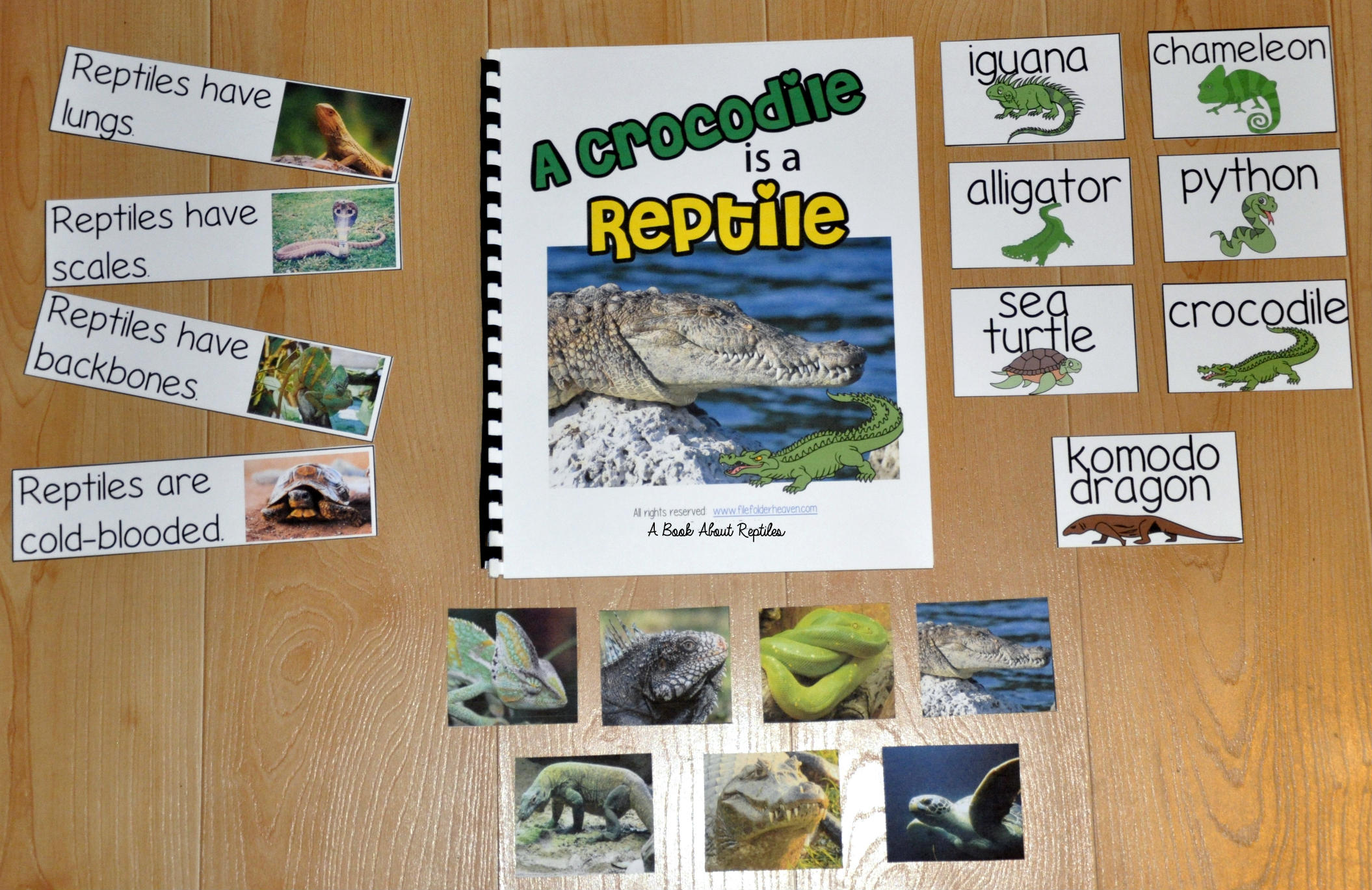 Reptiles Adapted Book--A Crocodile is a Reptile
