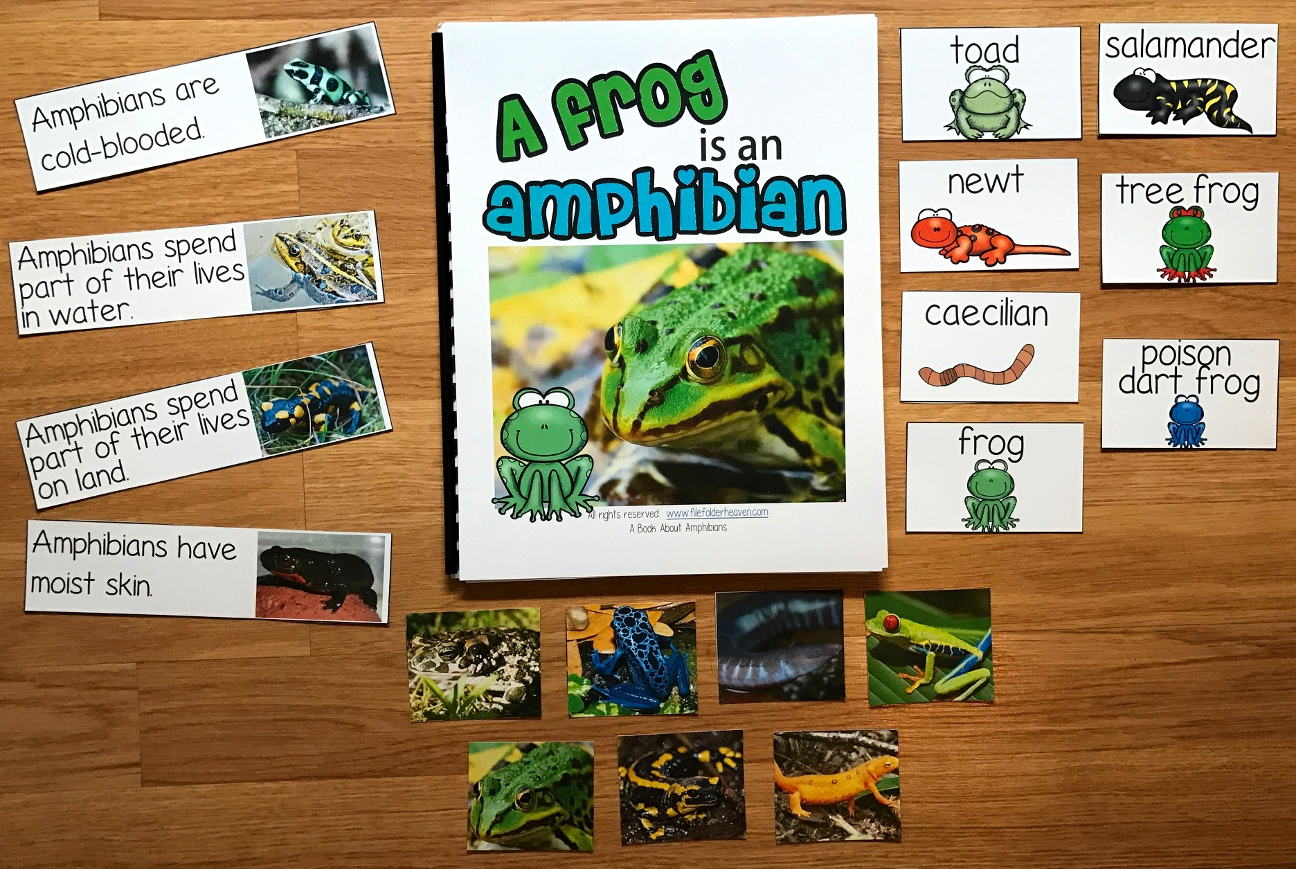 Amphibians Adapted Book (w/Real Photos)