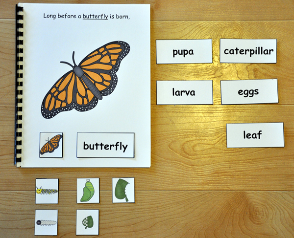 Butterfly Life Cycle Adapted Book