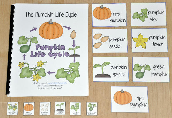 photograph about Life Cycle of a Pumpkin Printable known as The Pumpkin Existence Cycle Tailored Tune Ebook - $3.50 : Document